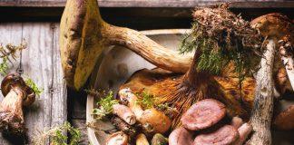 jak długo gotować grzyby przed zamrożeniem